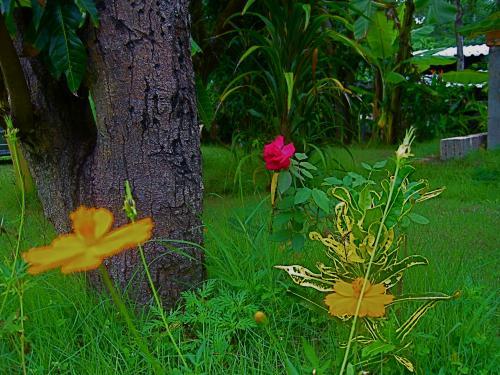 Thailand June 09 175.JPG